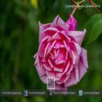 Bellas flores de la zona