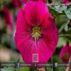Variedad de flores puede encontrar